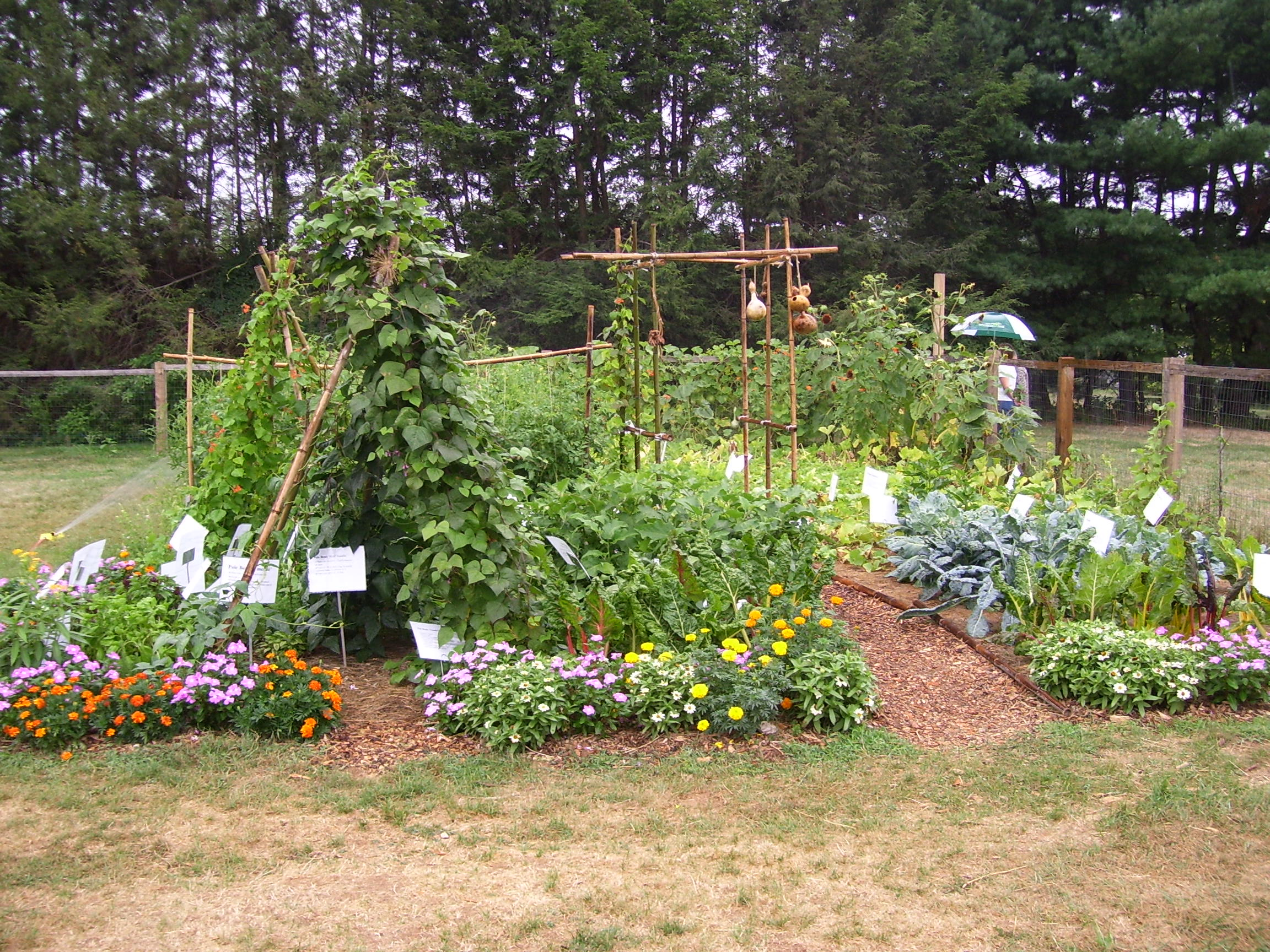 School garden pictures to pin on pinterest pinsdaddy for School garden designs